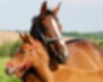 equinos_12629053-crop-u27619.png