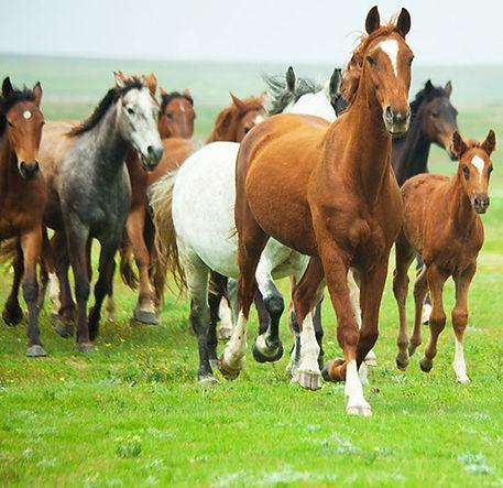parfarm_vet-caballos-crop-u190989.jpg