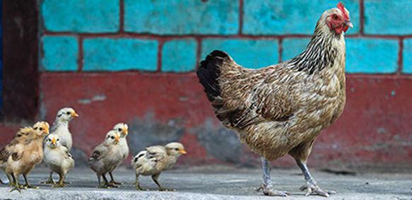 aves_79295617-crop-u27959.jpg