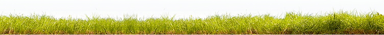 pasto-crop-u413.png