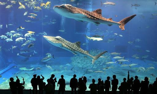 аквариум, рыбы, самый большой аквариум, отдых в Дубае, OvLGroup, ОАЭ,