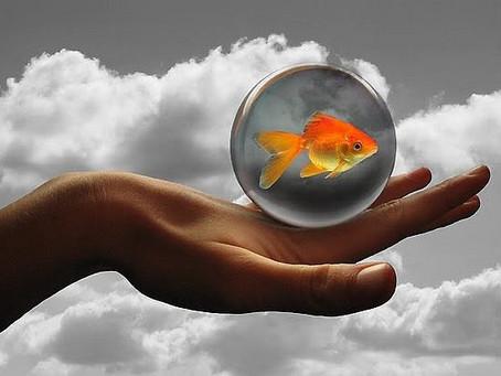 """Техника исполнения желаний """"Золотая Рыбка"""" - полезно делать каждый день! Работает на 100%"""