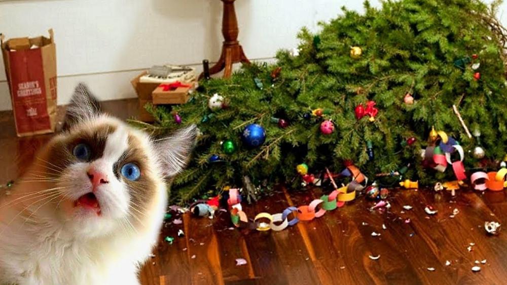 Año Nuevo, vacaciones, cómo decorar un árbol de Navidad, cómo elegir un árbol de Navidad, decoraciones de árboles de Navidad,