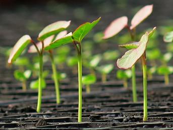 Vem aí o Curso Extensivo de Jardinagem Orgânica Comestível edição 2018