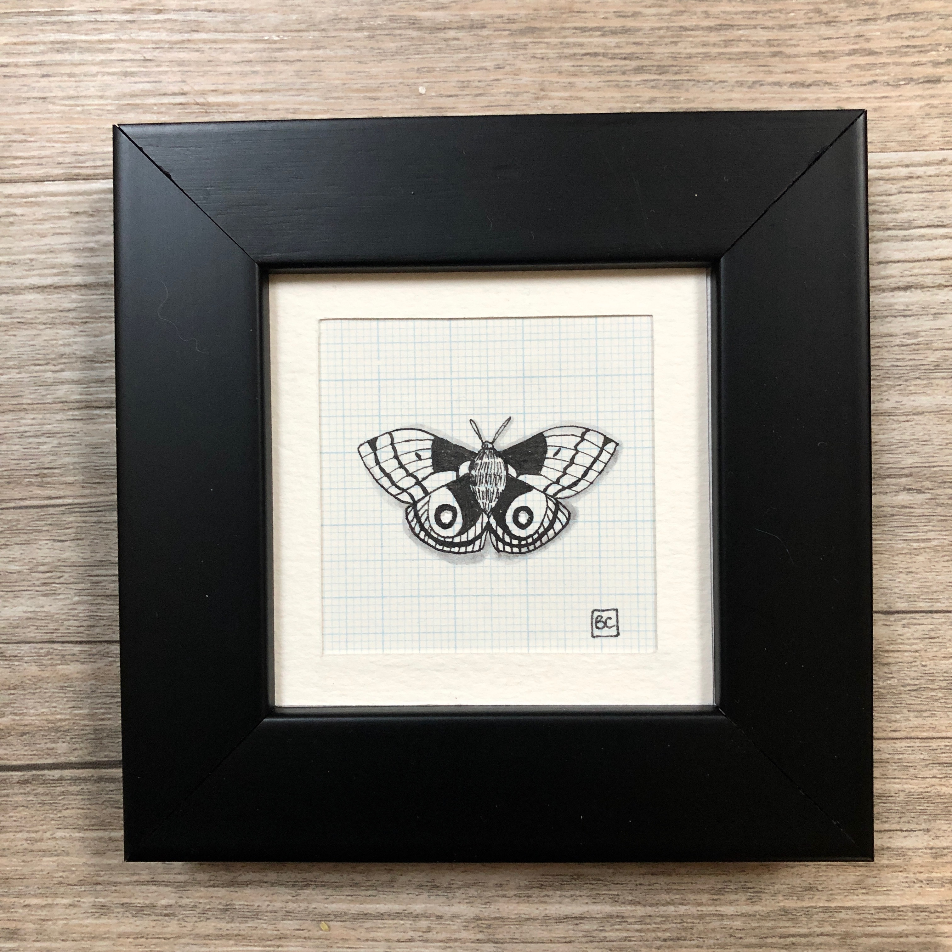 Papillon #5