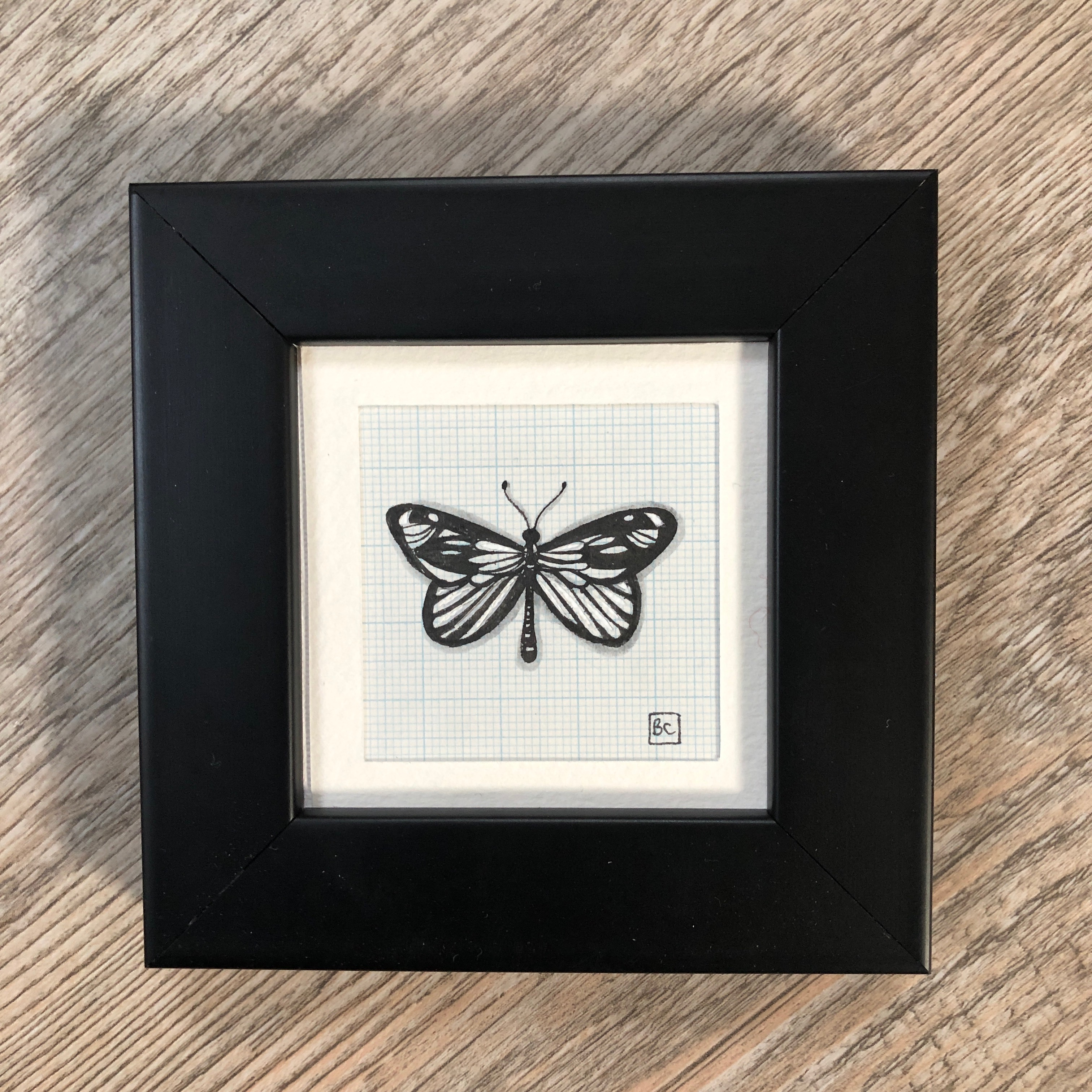 Papillon #10