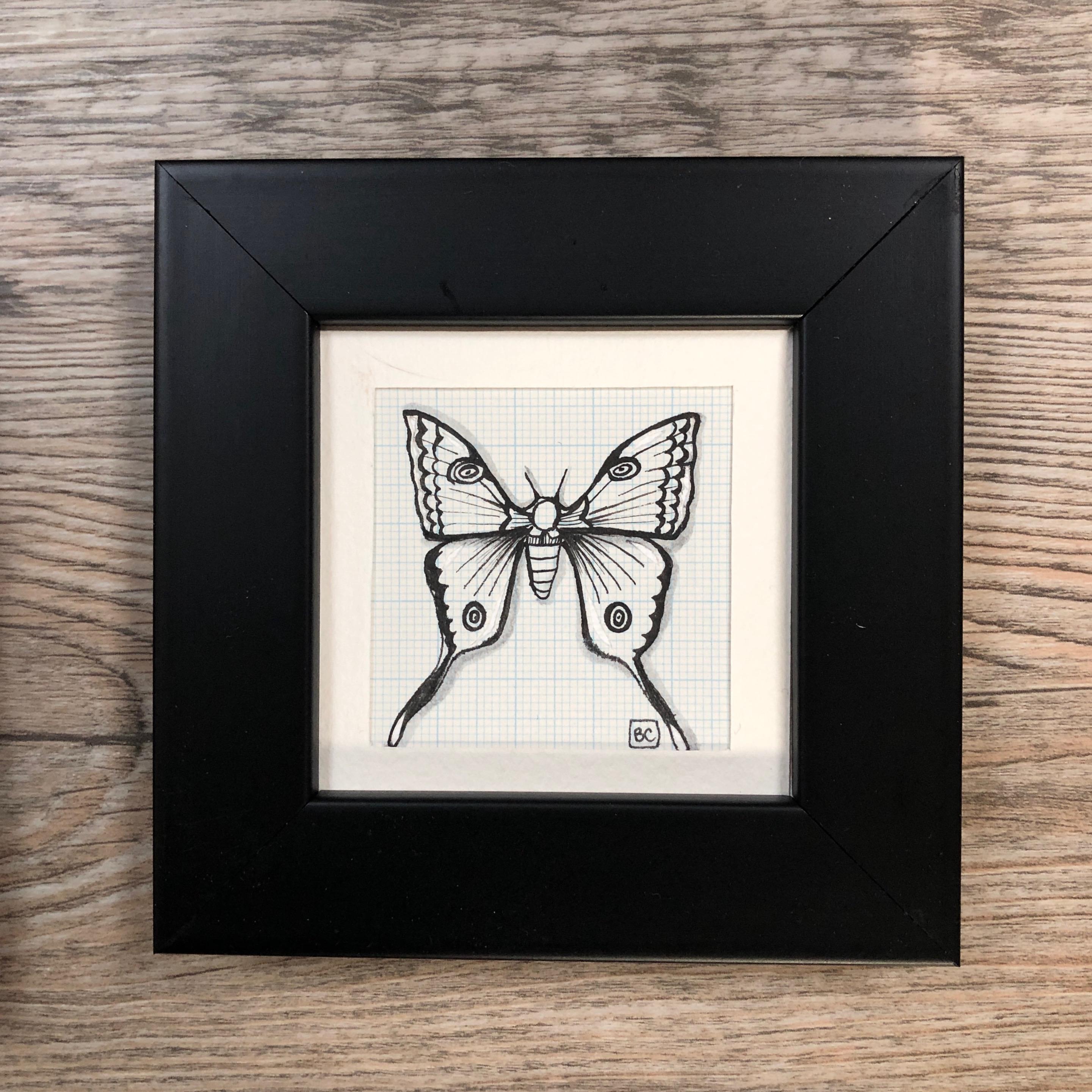 Papillon #8