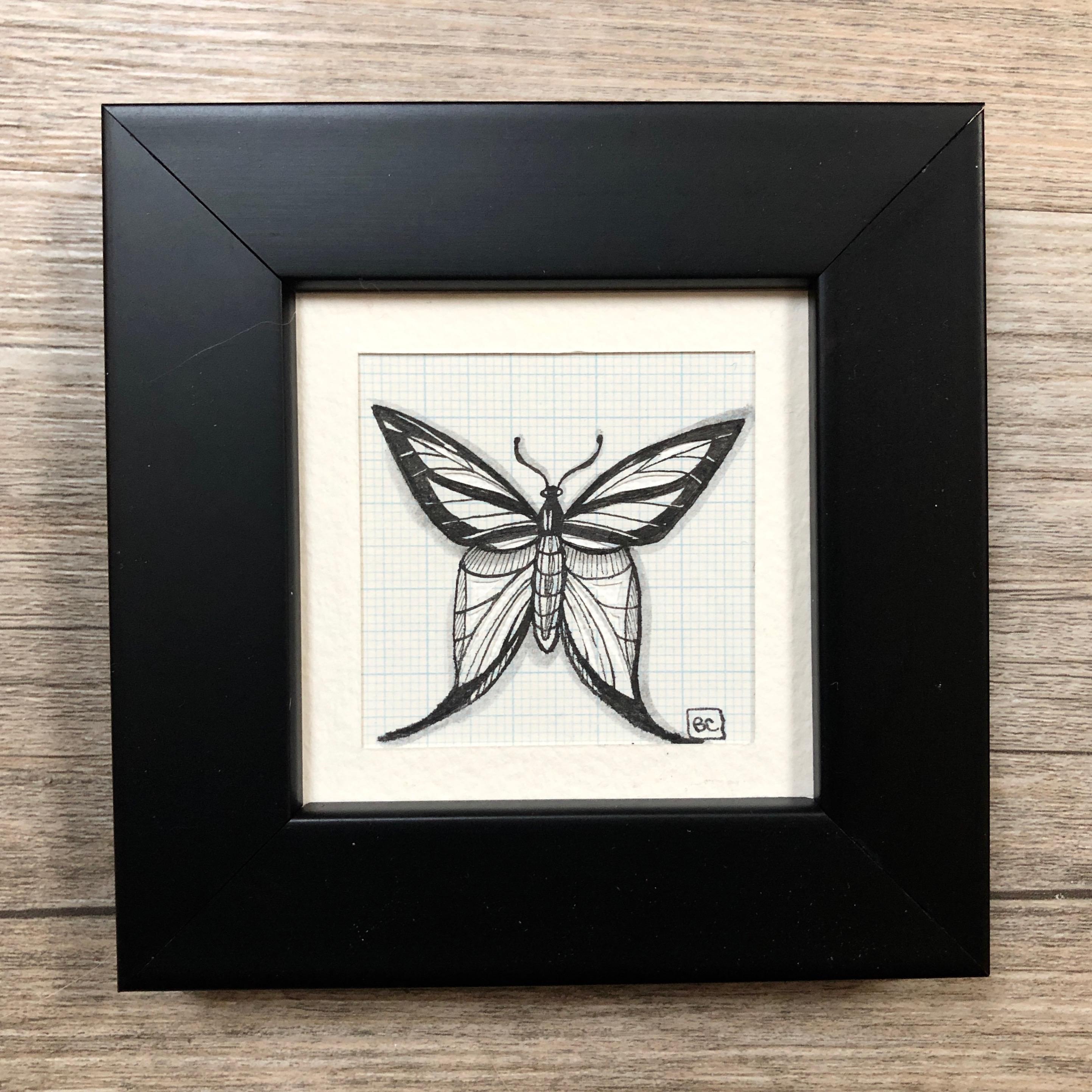 Papillon #6