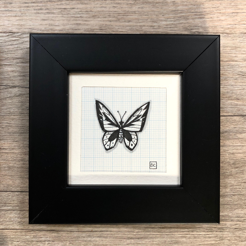 Papillon #4