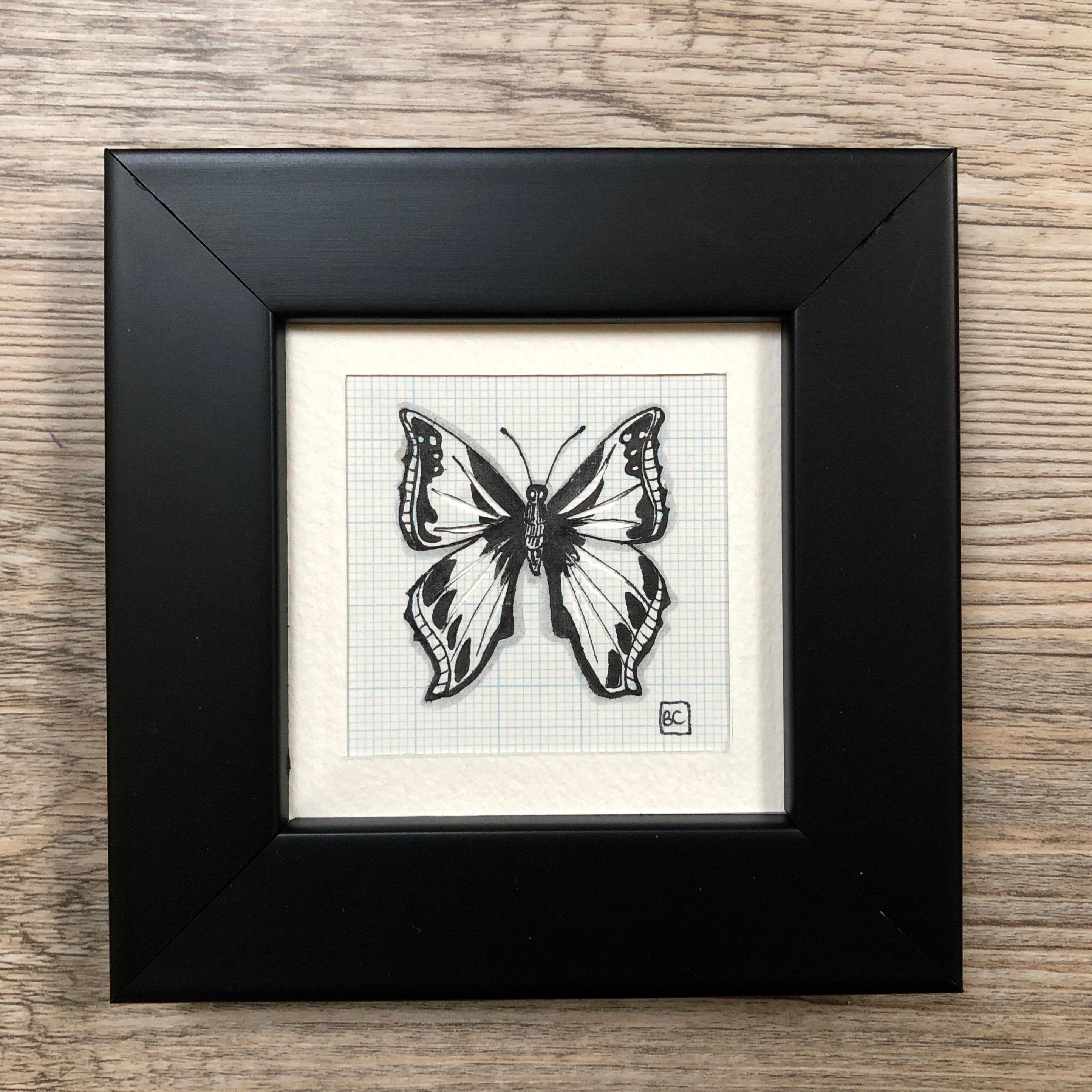 Papillon #11