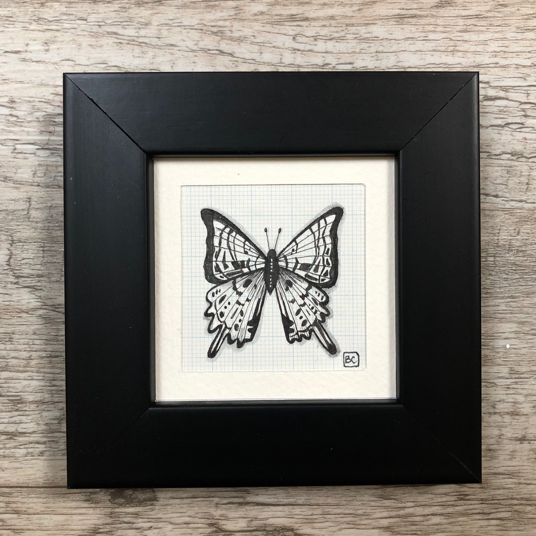 Papillon #15