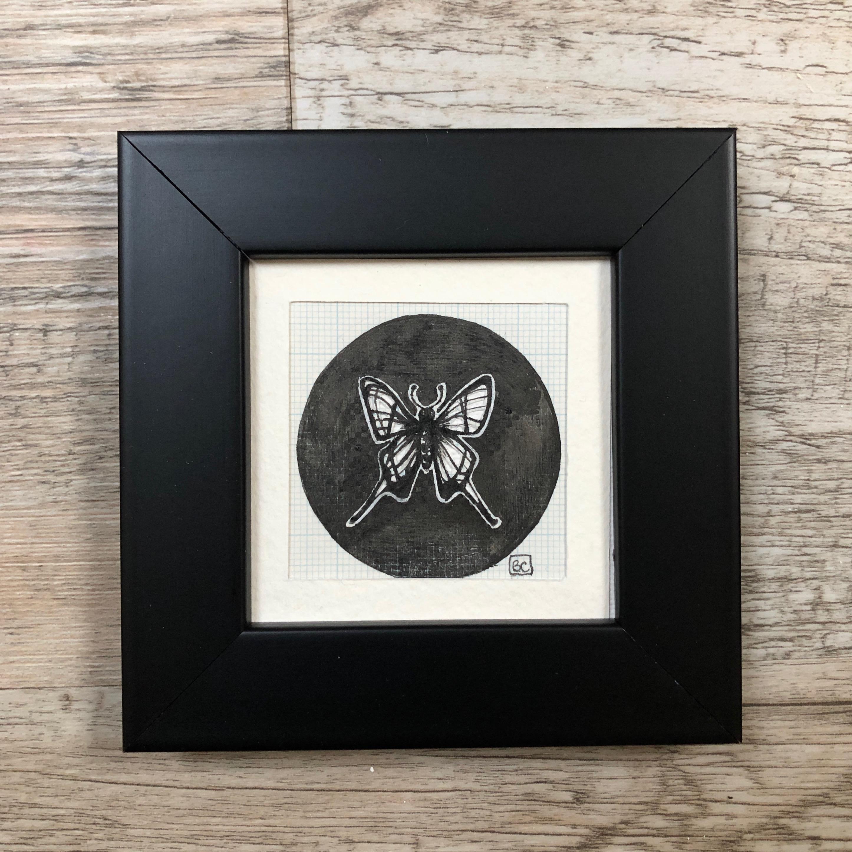 Papillon #12
