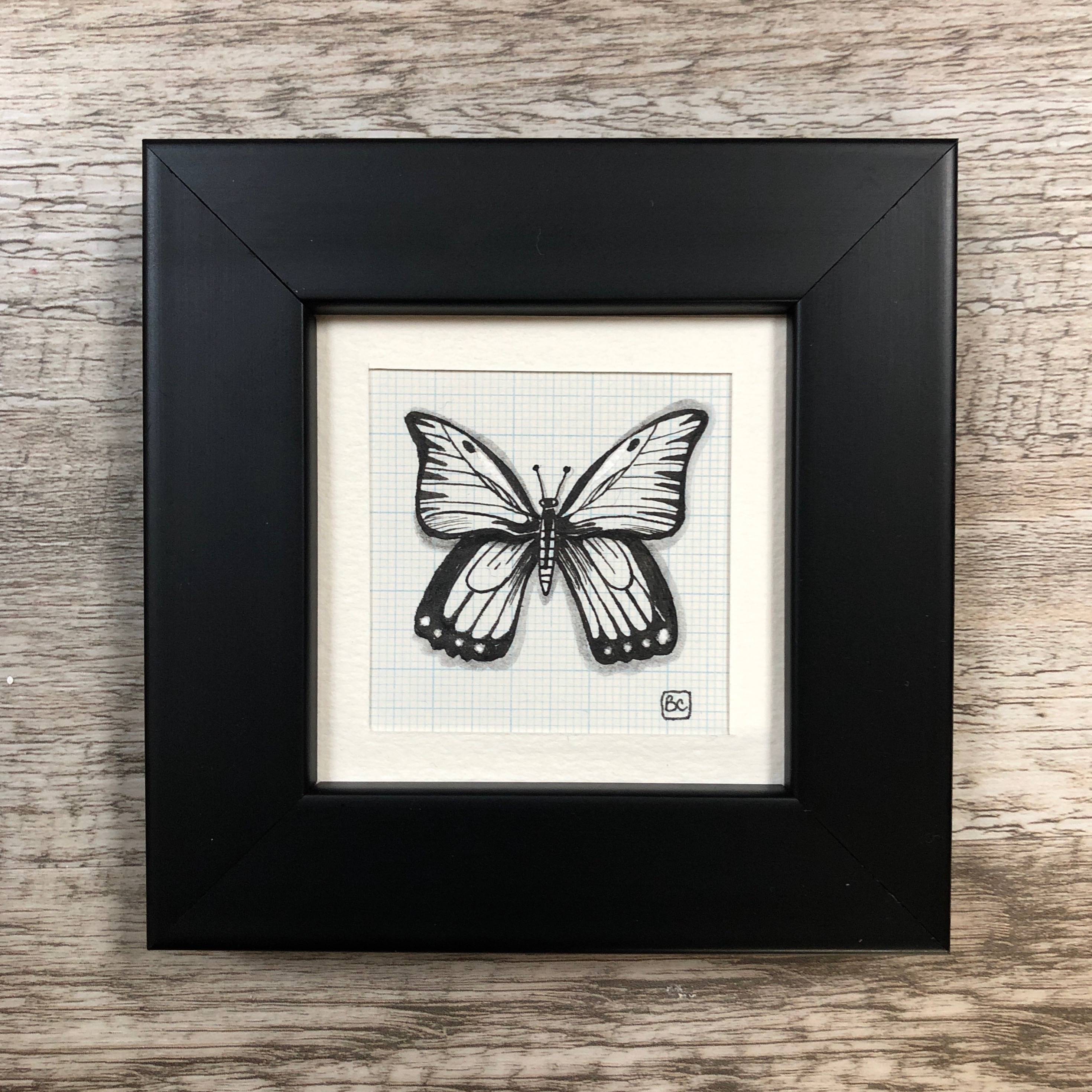 Papillon #13