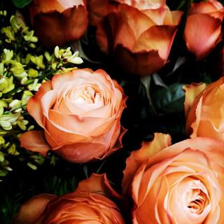Kahama Roses