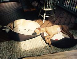 Roxy & Sam
