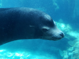 """The Aquarium of the Pacific is Awesome! Come """"sealife"""" for yourself!"""