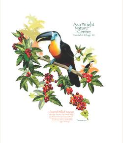 Asa Wright toucan white presentation