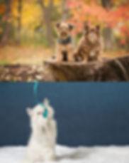 Posh-Pets-Photography-Brampton.jpg