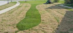 dethatching power raking lawn