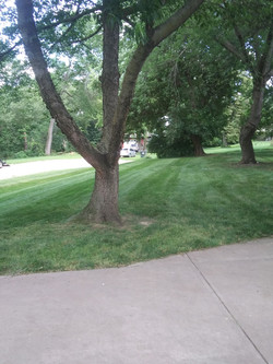 Lawn service near me