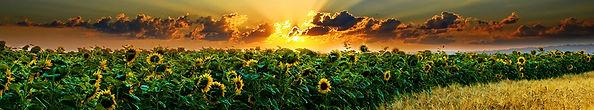 solarni.jpg