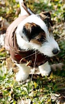 cane-cappotto