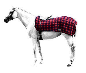 exercisesheet-rug-horse