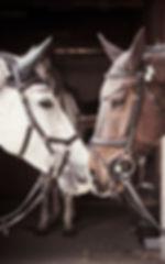 cavallo-cuffiette