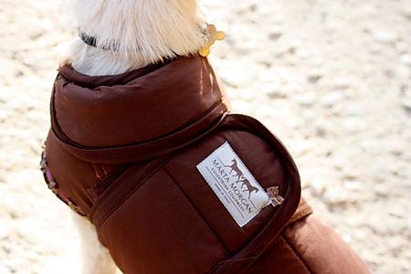 cane-cappottino-marrone