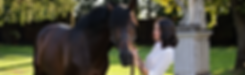 equestrian-rider-horse