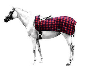 coprireni-scacchi-cavallo