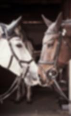 flybonnet-horse