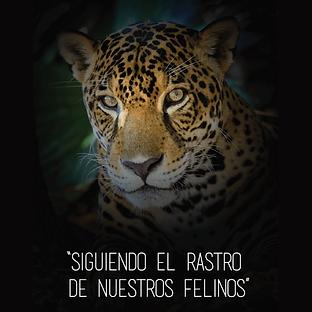 Huellas de Felinos - Brochure.png