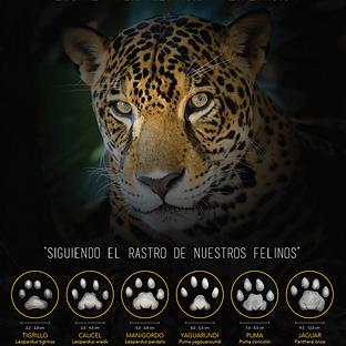 Huellas de Felinos - Afiche.png