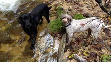 Mit Kind, Kegel und Hund auf Schusters Rappen unterwegs!