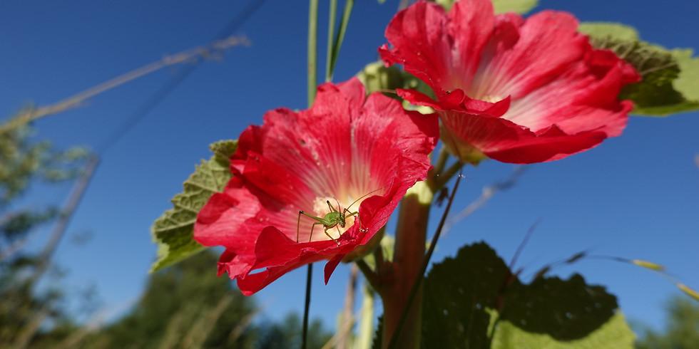 Der klimagerechte Garten - Was ist zu tun?