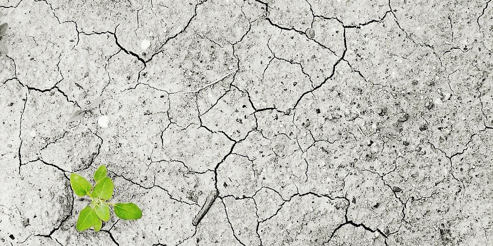 Klimawandel und seine Folgen in Rheinland-Pfalz. Konsequenzen für mein Handeln