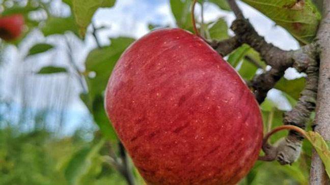 Organic Cox Orange - Apple (kg)