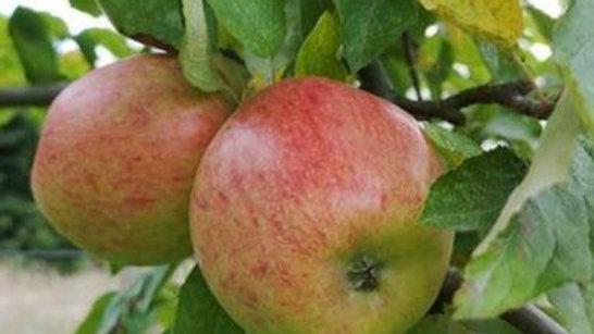 Organic Braeburn - Apple (kg)