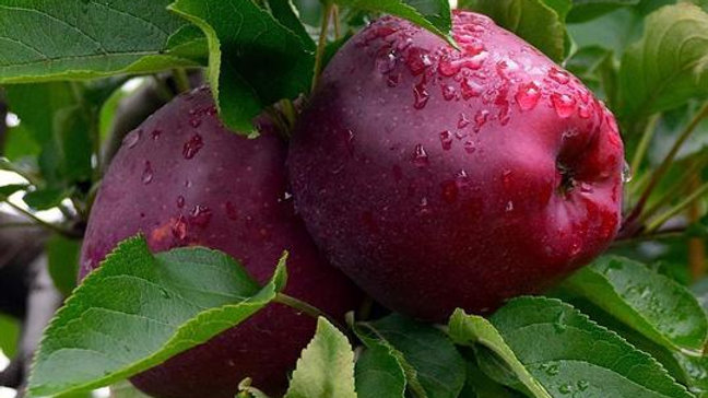 Organic Red Delicious - Apple (kg)