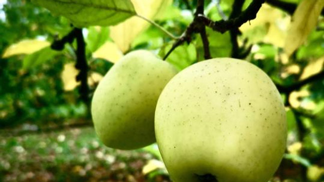 Organic Orin - Apple (kg)