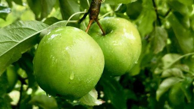 Organic Granny Smith - Apple (kg)