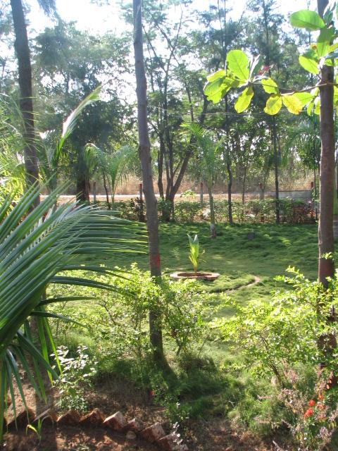 plantation.JPG