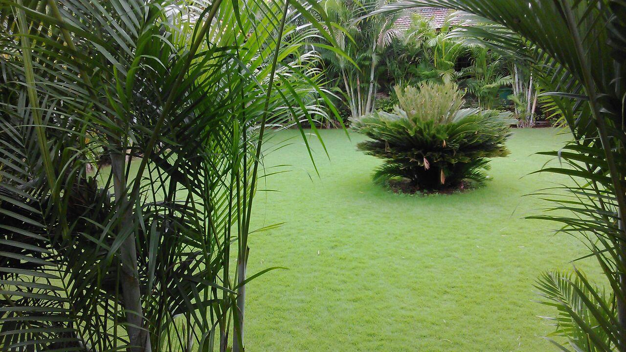 focal point  garden.jpg