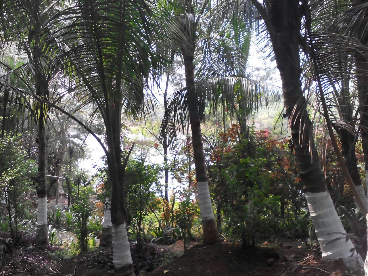garden wadi concept.jpg