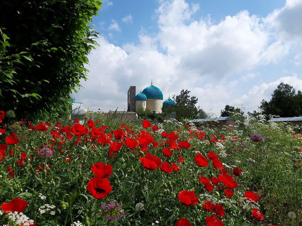 zangiota_tashkent_poppies
