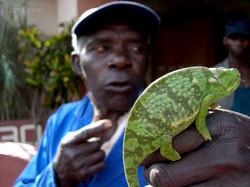 chameleon George, Zimbabwe