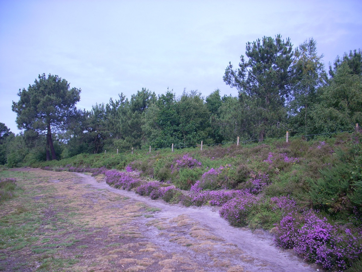 Upton near railway line resize.jpg