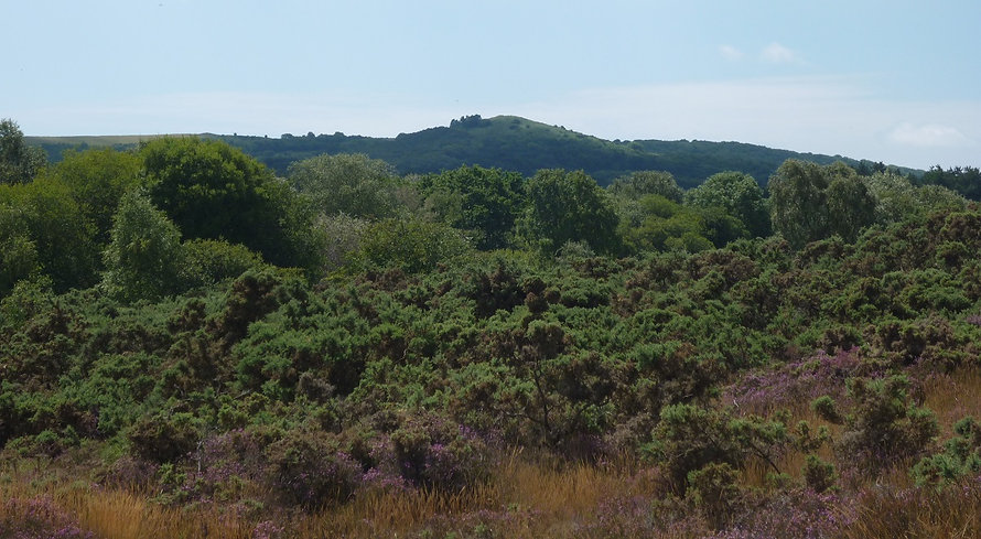 about the heaths stoborough view 2010 re