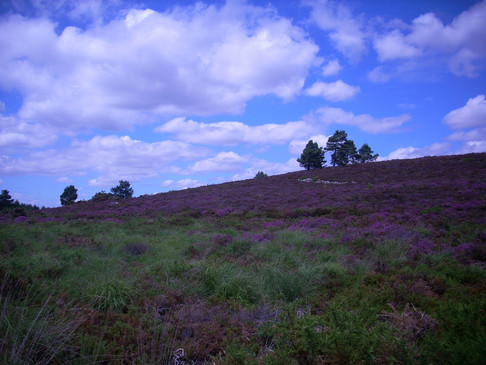 Forestry Commission Forest and Heathland Project